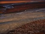Snow Geese II, 2002 © Subhankar Banerjee 2009