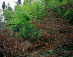 "Windwurf im Habsburgwald durch den Sturm ""Lothar"", Hausen b. Brugg AG (30. 8. 2000 / 26. 3. 2001)  © documenta natura"